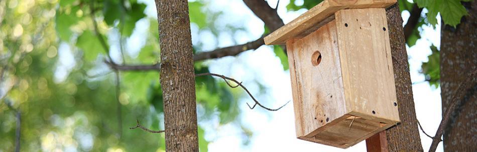 Maak zelf een vogelhuisje van hout - Casette per uccellini da costruire ...